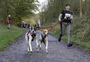 A fantastic year of Canicross events at Dalby Forest